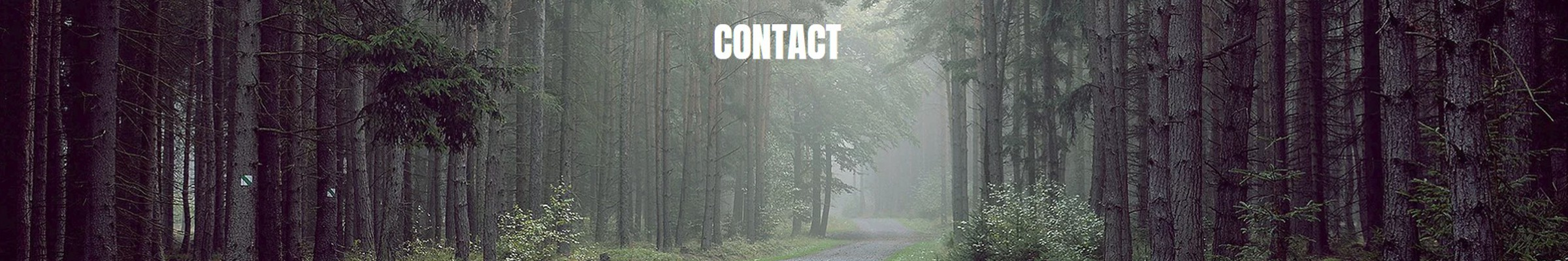 contact page header image - forest trail